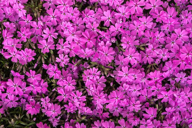 Flowers, Flower Grass, Pink, Behold, Spring Flowers