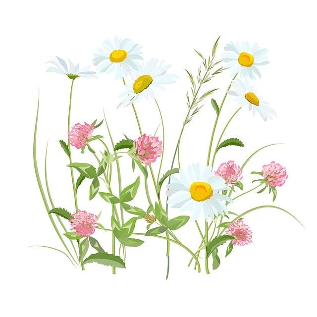 Flowers, Flowers Of The Field, Field, Meadow, Spring