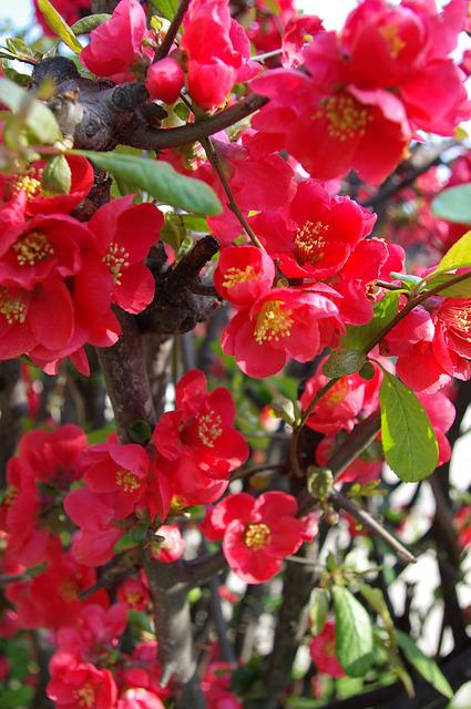 People Who Tree Flower, Spring Flowers, Red Flower