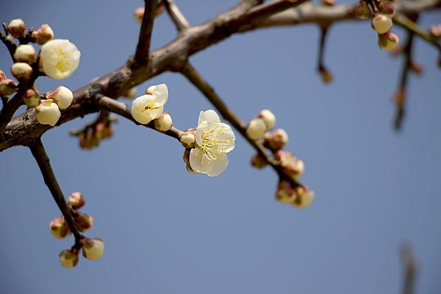 Spring, Nature, Plants, Spring Flowers, Leaf, Blossom