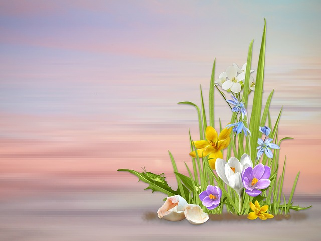 Spring, Spring Flowers, Nature, Flower, Plant, Season