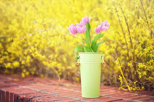 Spring Flowers, Forsythia, Yellow, Tulips, Pink Tulips