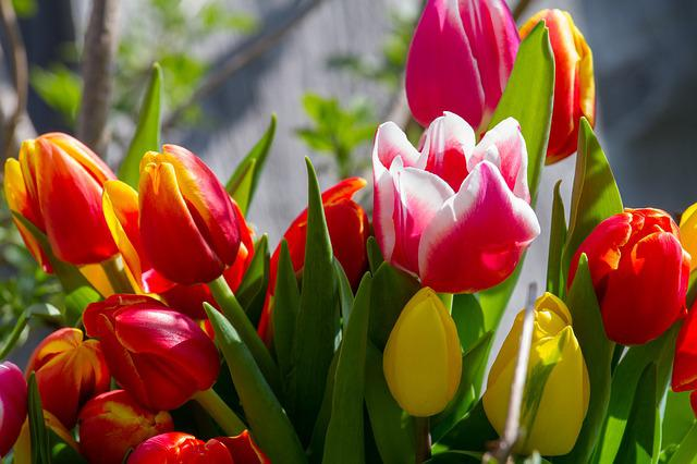 Tulips, Nature, Colorful, Tulip Bouquet, Garden, Spring
