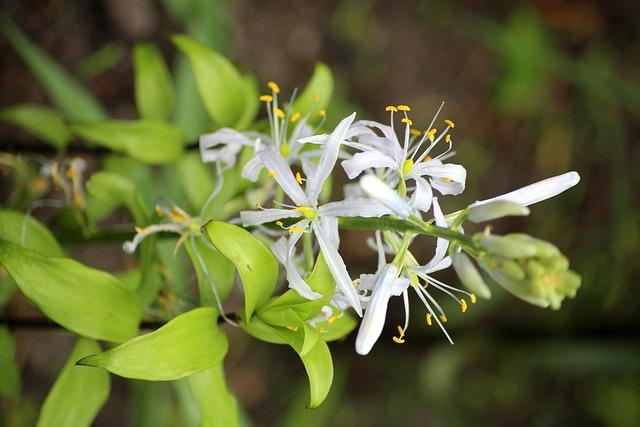 Garden, Spring, White Flowers, Vegetation