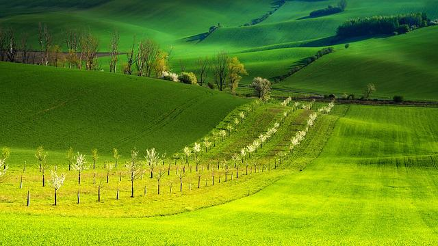 Spring, Trees, Green