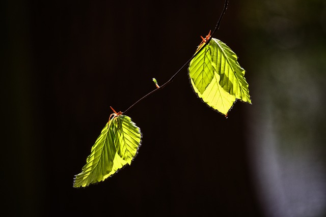Leaf, Foliage, Twig, Tree, New Leaf, Spring Leaf