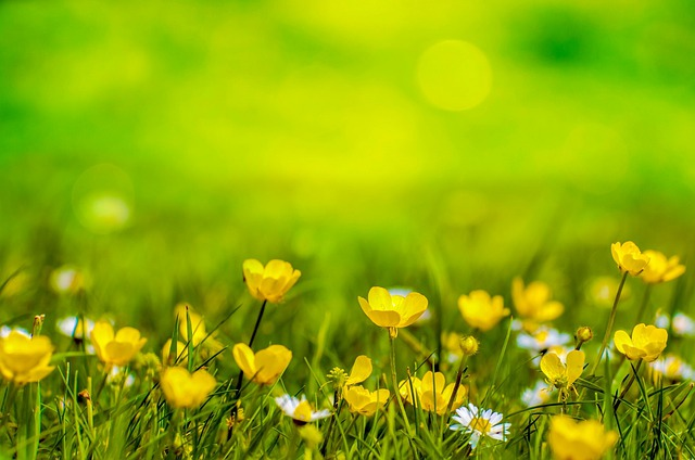 Spring, Background, Flower, Yellow, Field, Meadow