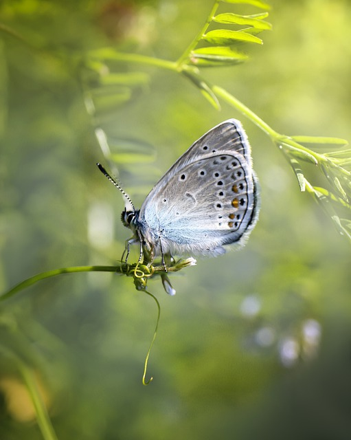 Butterfly, Insect, Butterflies, Insects, Nature, Spring