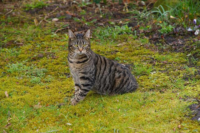 Nature, Cat, Animal, Mammal, Cute, Attention, Spring