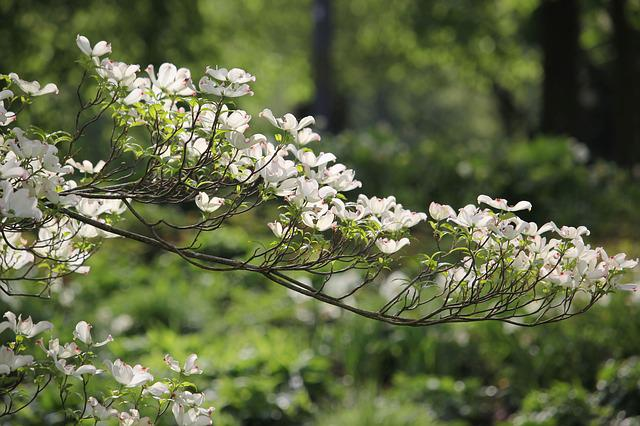 Flowers, Branch, Tree, Plant, Nature, Spring
