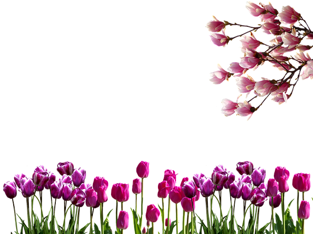 Spring, Tulips, Branches, Nature, Red, Flowers