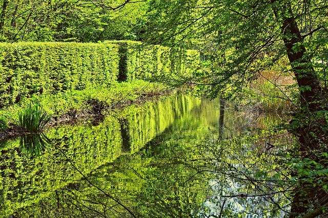 Shorn Hedge, Canal, Banks, Tree, Spring, New Leaves