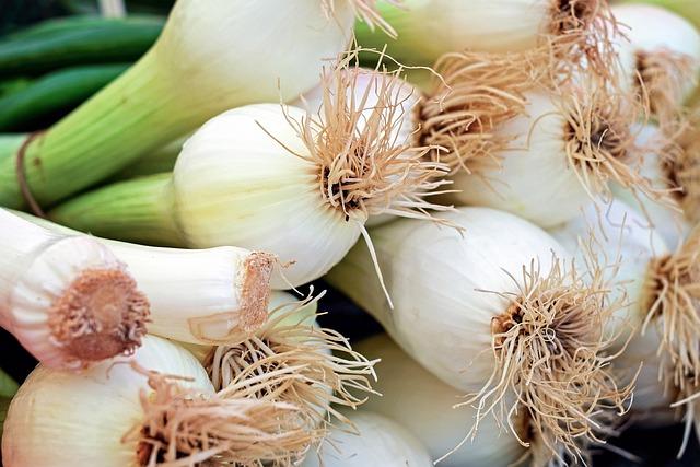 Onion, Spring Onion, Early Onion, Leek Greenhouse