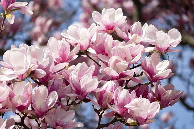 Blooming, Spring, Nature, Garden, Pink, Flower