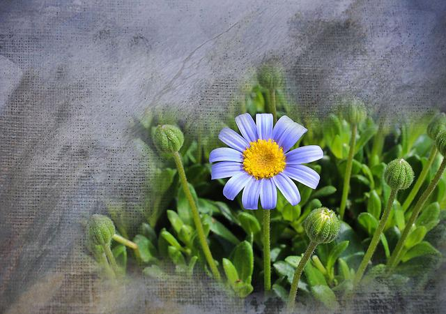 Flower, Plant, Nature, Spring, Blossom, Bloom