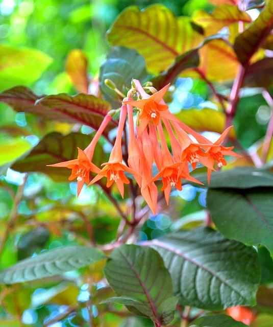 Fuchsia, Spring, Maranta, Flower, Plant