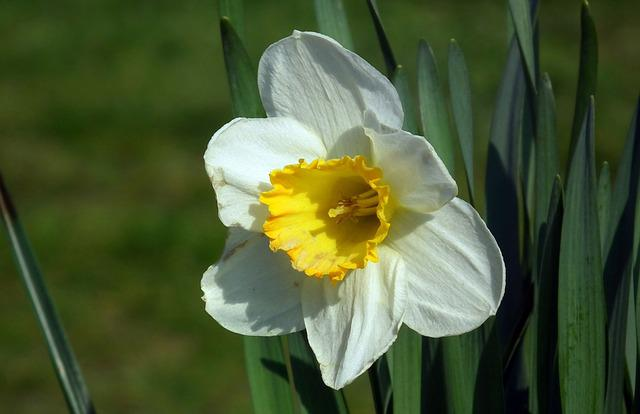 Flower, Daffodil, Nature, Plant, Spring, Easter