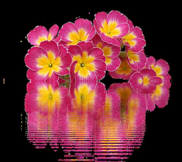 Spring, Primroses, Plant, Primrose, Spring Flowers