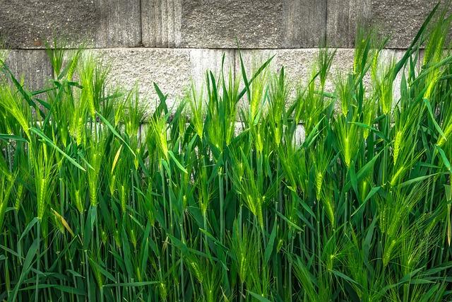 Barley, Nature, Green, Plants, Leaf, Spring