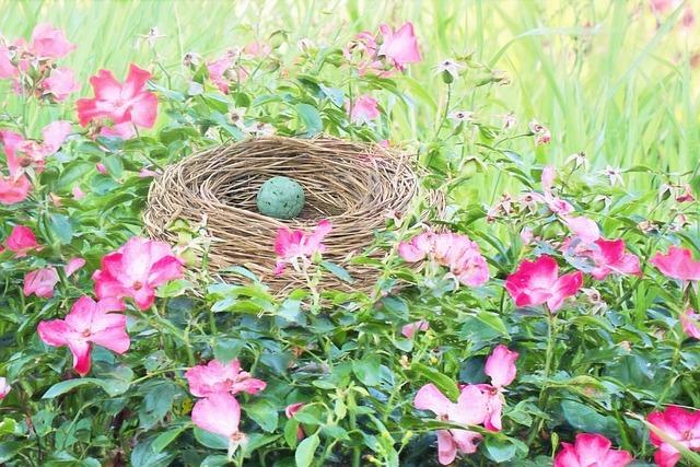 Bird Nest, Bird's Nest, Robin Egg, Bird Egg, Spring