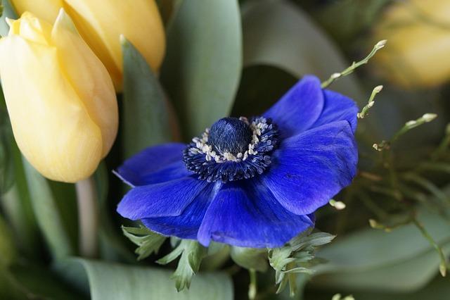 Bouquet, Tulip, Spring, Flowers, Schnittblume, Flora