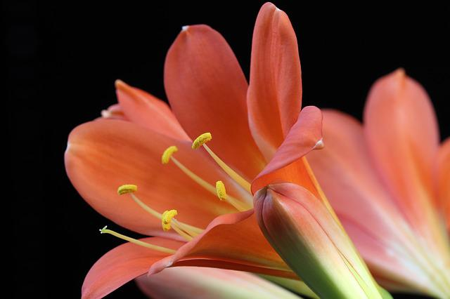 Spring Flowers, Spring, Nature, Flowers, Plants