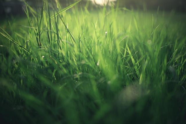 Meadow, Nature, Summer, Spring, Grass, Green