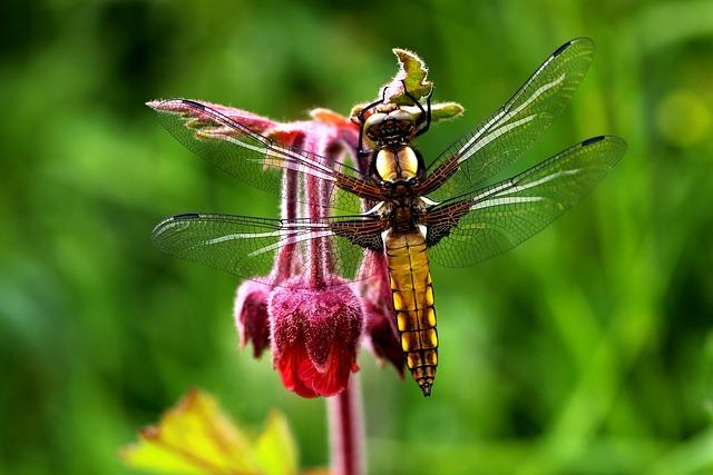Macro, Nature, Flowers, Spring, Peace, Torul, Gümüşhane