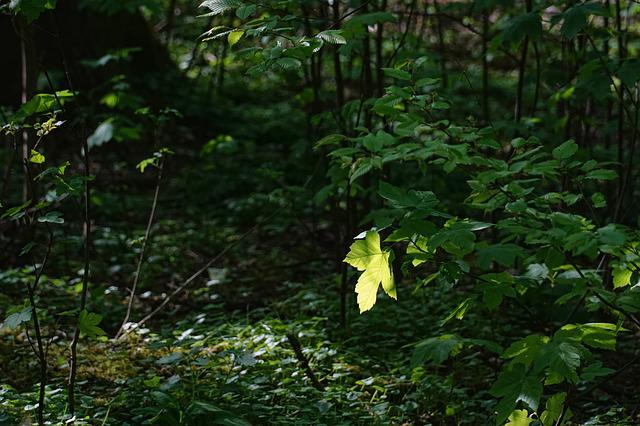 Leaf, Wood, Tree, Nature, Spring, Back Light, Plant