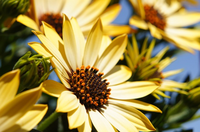 Flower, Yellow, Spring, Sun