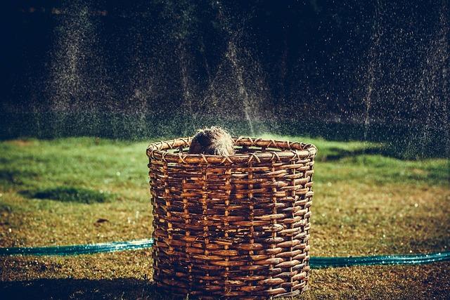 Siblings, Children, Basket, Sprinkler, Water, Backyard