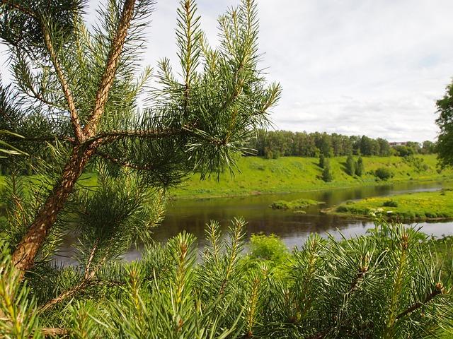 River, Landscape, Beach, Spruce