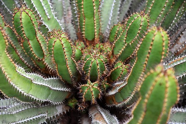 Cactus, Spur, Prickly, Plant, Sting, Pointed