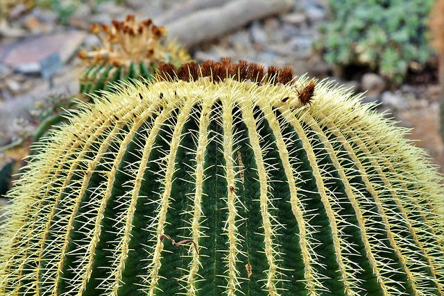 Cactus, Mother In Law Chair, Prickly, Spur, Thorns