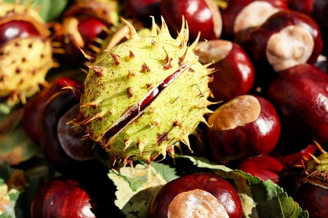 Chestnut, Buckeye, Red Buckeye, Spur, Autumn