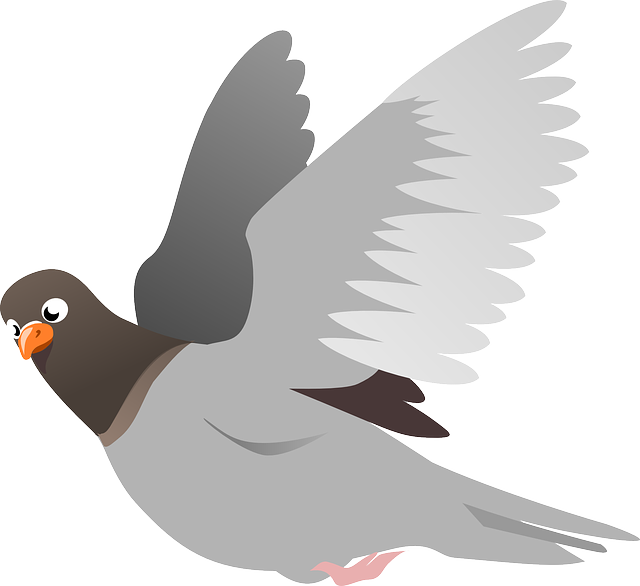 Squab, Pigeon, Animal, Bird, Flight, Flying, Wings
