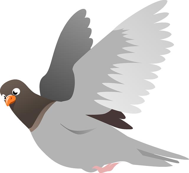 Squab, Pigeon, Animal, Bird, Flight, Flying, Wings
