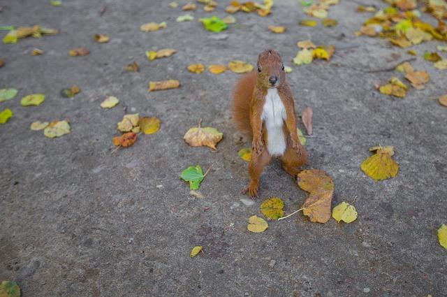 Animal, Dry Leaves, Squirrel, Wildlife