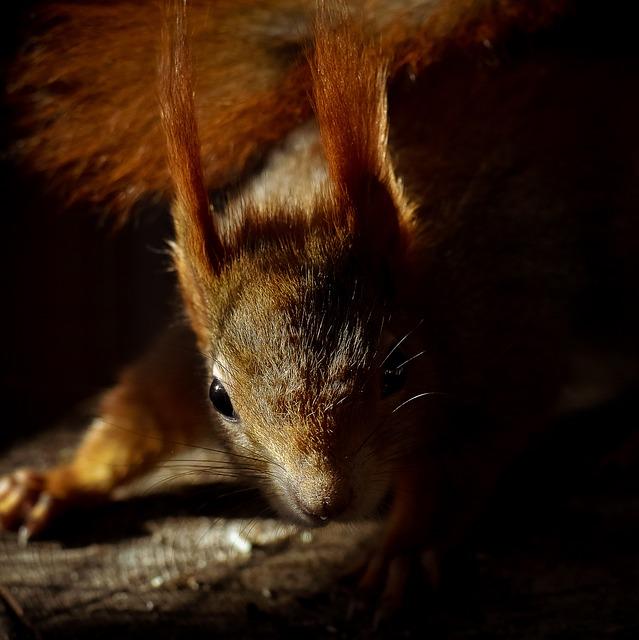 Squirrel, Chipmunk, Rodent, Animal, Mammal, Fauna