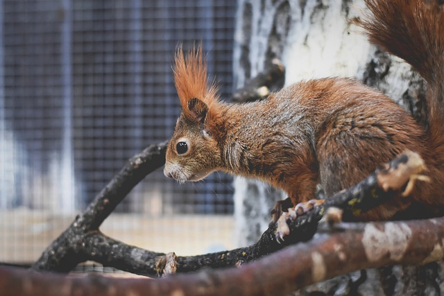 Squirrel, Nager, Cute, Animal, Nature, Rodent