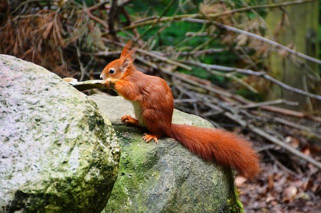 Squirrel, Forest, Eco-park, Güstrow