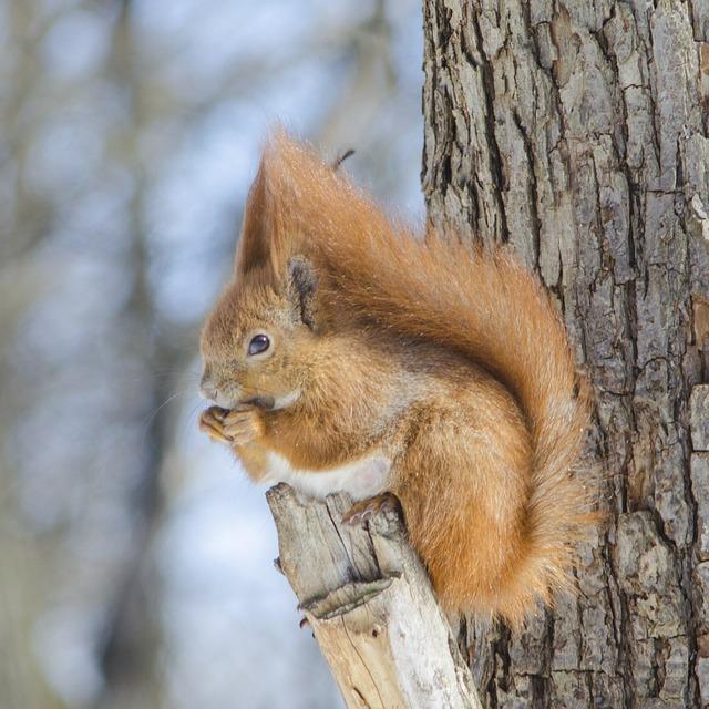 Mammals, Living Nature, Wood, Nature, Squirrel, No One