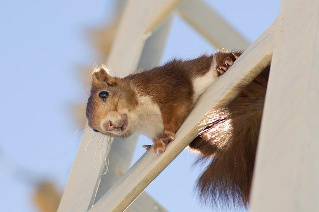 Squirrel, Rodent, Cute, Mammal, Animal, Fur, Looking