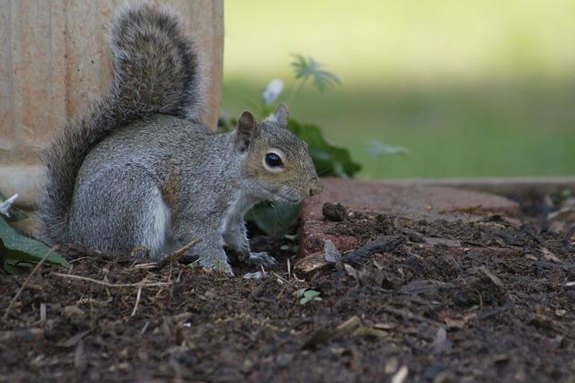Squirrel, Mammal, Wildlife, Rodent, Nature