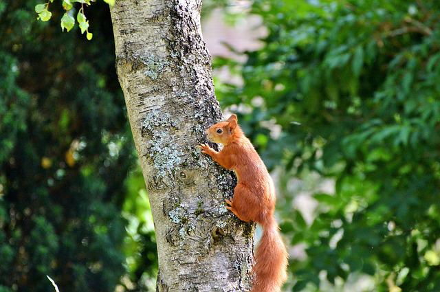 Squirrel, Rodent, Forest Animals, Animal, Foraging