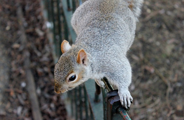 Squirrel, Squirrels, Wildlife, Animals, Outdoors, Park