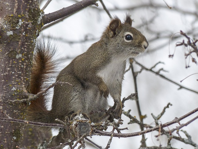 Squirrel, Animal, Forest, Branch, Tree, Nature, Mammal