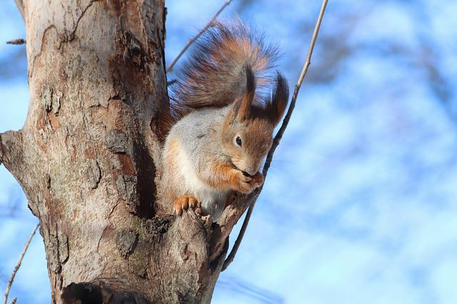 Nature, Tree, Outdoors, Wood, Squirrel, Mammals, Rodent