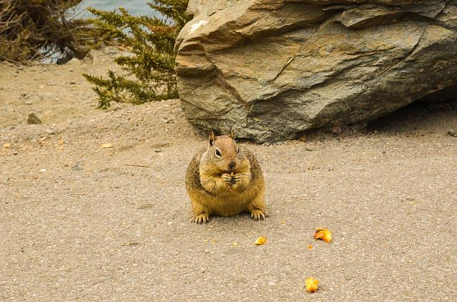Usa, America, California, Animal, Wild Animal, Squirrel