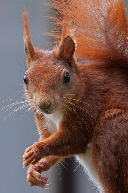 Squirrel, Nature, Possierlich, Verifiable Kitten